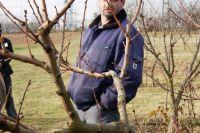 2011-11-26_Schnittkurs_Beerenschnitt_Siegle_01