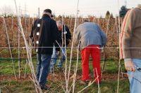 2011-11-26_Schnittkurs_Beerenschnitt_Siegle_22