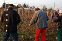 2011-11-26_Schnittkurs_Beerenschnitt_Siegle_23