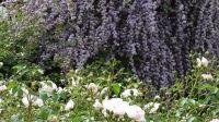 Blumenschmuckwettbewerb